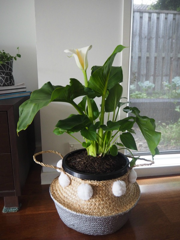 stylist lily house plant. pom blanter basket in my home Planter Baskets Are a Stylish Way To House Your Plants Indoors
